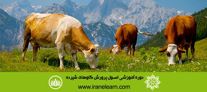 دوره آموزشی اصول پرورش گاوهای شیرده  Principles of Growing up lactating Cows E-learningB