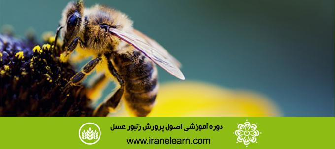 دوره آموزشی اصول پرورش زنبور عسل Principles of Beekeeping E-learningB