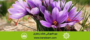 دوره آموزشی کشت زعفران Saffron Growing E-learningB