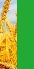 آموزش مجازی مباحث دریافت نشان کشاورزی GAP