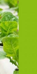 آموزش مجازی مدیریت گلخانه های هیدروپونیک