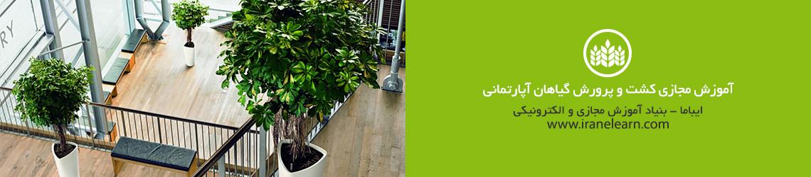 آموزش مجازی کشت و پرورش گیاهان آپارتمانی