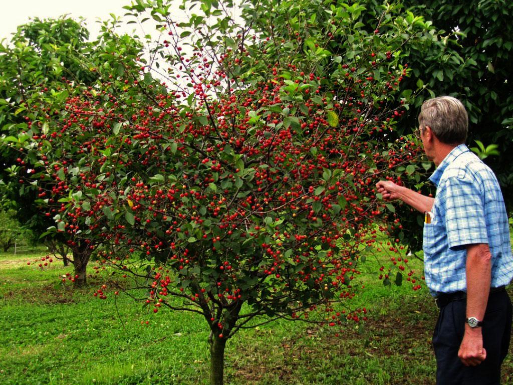 نکات باغ میوه