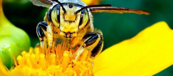 پرورش زنبورعسل