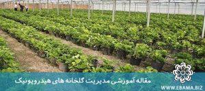 مدیریت گلخانه های هیدروپونیک
