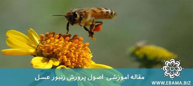 اصول پرورش زنبور عسل