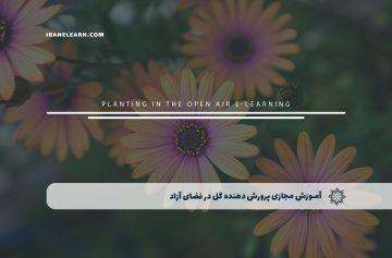 پرورش دهنده گل در فضای آزاد