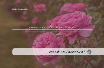 پرورش دهنده گل محمدی
