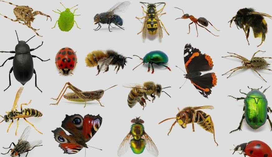 آشنایی با رشته حشره شناسی
