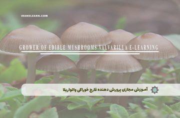 پرورش دهنده قارچ خوراکی والواریلا