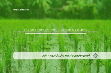 آموزش مجازی برنجکاري به روش بذر کاري مستقیم