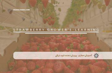 پرورش دهنده توت فرنگی