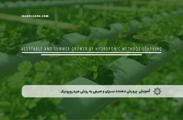 پرورش دهنده سبزی و صیفی به روش هیدروپونیک