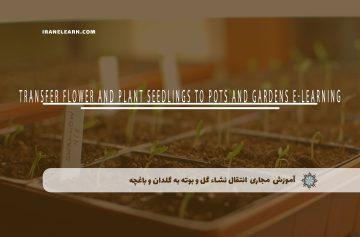 انتقال نشاء گل و بوته به گلدان و باغچه